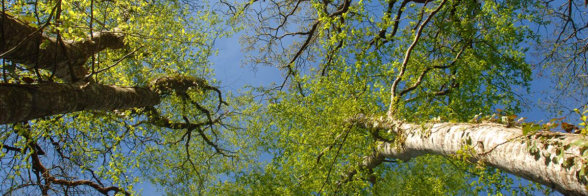 Forêt de Chizé, photo de Philippe Wall
