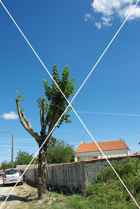 Taille sévère et inadaptée d'un arbre © CAUE 79