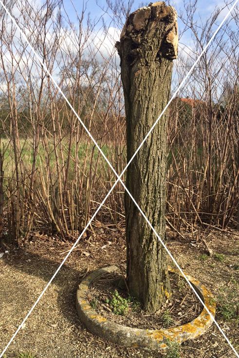 Taille sévère et inadaptée d'un arbre