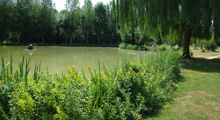 Gestion écologique d'un plan d'eau à Sainte-Soline